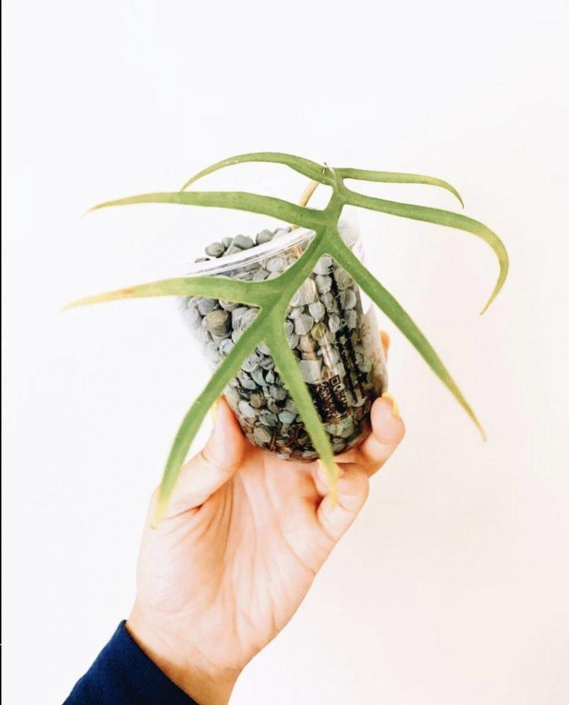Propagate your plants using Smart Gravel